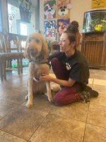 Lainie, Dog groomer in Chandler, AZ